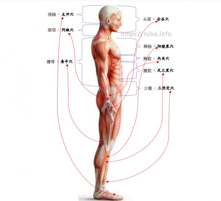 针灸必学必悟:新8总穴及其对应治疗病症